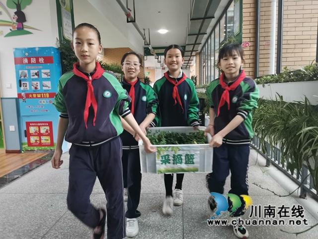 泸县:师生种出有机菜 义卖捐赠一份爱(图3)